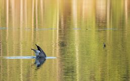 Gone fishing, Maine pond, golden hour Stock Photo