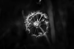 Gone to Seed Stock Photography