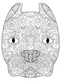 Good American Pit Bull Terrier head coloring raster for adults Royalty Free Stock Image