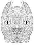 Good American Pit Bull Terrier head coloring vector for adults. Good American Pit Bull Terrier head coloring book for adults vector illustration. Anti-stress Royalty Free Stock Photos