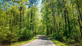 Good Asphalt Forest Road In Sunny Summer Day. Lane Royalty Free Stock Photo