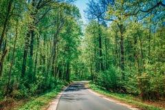 Good Asphalt Forest Road In Sunny Summer Day. Lane Stock Photos