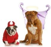 Good and bad dog. Good dog - bad dog - english bulldog devil sitting beside dogue de bordeaux angel on white background Royalty Free Stock Photography