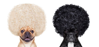 Good and bad dogs Royalty Free Stock Images