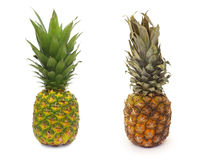 Good and bad piece of pinapple fruit. Isolated on white Stock Image