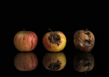 Good, bad and rotten apples. Line of three apples including good, bad and completely rotten. Set on black background with reflection Royalty Free Stock Photos