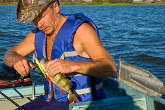 Good bass. A fisherman caught a big bass and lays out his mouth minnow Stock Images