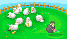 Good black sheep in spoil white sheep herd Royalty Free Stock Image