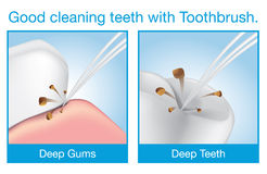 Good cleaning teeth with toothbrush Royalty Free Stock Images