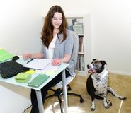 Taking a break with Good dog at office work. Dog behaving well in office with business woman Royalty Free Stock Photography