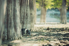 Good dog in the woods Royalty Free Stock Photos