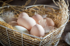 Good and ecological eggs from the henhouse Royalty Free Stock Image