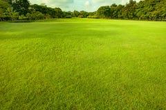Good environment green grass ground Stock Photos