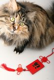 Good fortune cat. Stock Photography