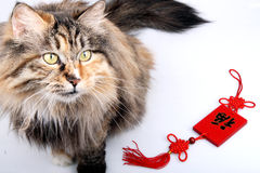 Good fortune cat. Stock Photo