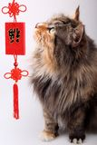 Good fortune cat. Royalty Free Stock Photo