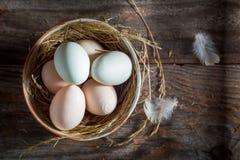 Good free range eggs from the henhouse Royalty Free Stock Image