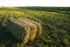 Good harvest. A lusern bale lying in the field, with some other bales is the distance Royalty Free Stock Images