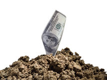 Good investment. Paper currency growing in pile of soil on white background Royalty Free Stock Photos