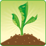 Good investment. When you will invest, you will be gather crops Royalty Free Stock Images