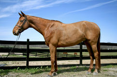 Good looking horse Stock Images