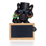 Good luck dog Royalty Free Stock Photo