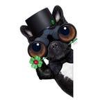 Good luck dog Stock Image