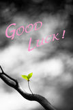 Good Luck Leaves Stock Photography