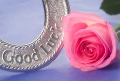Good luck wedding horseshoe and pink rose. Gentle soft focus; shallow dof Royalty Free Stock Image