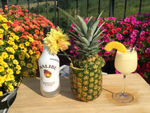 A good Malibu cocktail with Pineapple. A portrait with a pineapple,flowers and Malibu Rum Royalty Free Stock Photography