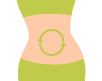 Good metabolism in the body. Good metabolism. The body of a woman with green arrows on her belly. Vector illustration Stock Images