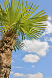 Good mood palm. Palm photographed from below against the sky Stock Image