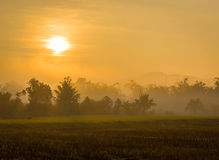 Good Morning Chiang Mai. The sun forces its way through the early morning mist in Northern Thailand Stock Photography