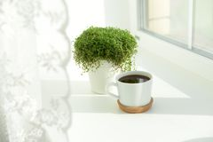good morning, cup of coffee by the window, green plant royalty free stock photos