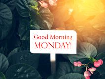 Good morning words on paper tag in the garden. Good Morning Monday words on white wood tag with nature vintage background. Inspiration motivation life words on royalty free stock images