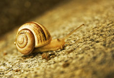 Good morning, Mr.Snail Royalty Free Stock Images