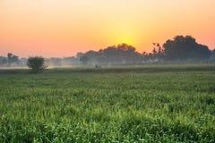 Good morning nature Stock Image