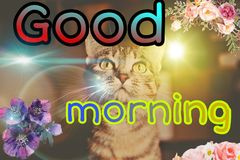 Good morning picture vector illustration
