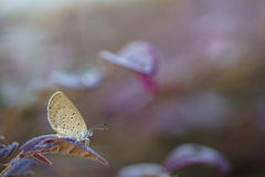 Good morning. Small butterfly on a leaf at the park Stock Photo