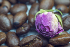Good morning spirit. Coffee beans and tender rose close up. Selective focus Stock Photos
