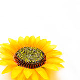 Good morning with sunflower Stock Images