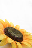 Good morning with sunflower stock photo