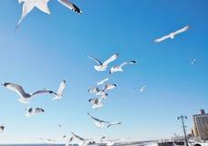Good morning  winter coney island Royalty Free Stock Photos