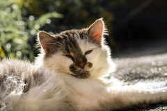 Good-natured cat lays and warms itself in the sun. A good-natured cat lays and warms itself in the sun royalty free stock images