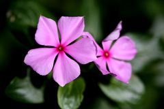 Good night pink flower Stock Image