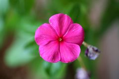 Good night pink flower Stock Photos