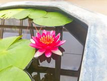 Good night flower. Good night Thailand Chiang Mai Royalty Free Stock Images