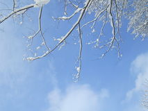 Beautiful winter blue sky with snow on the tree Stock Images