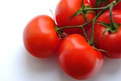 Large ripe tomatoes on white. Good quality close up photo of fresh ripe tomatoes on green branch, view from the top. Tomatoes are placed on some pure white royalty free stock image