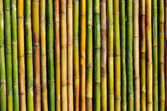 Good quality natural bamboo texture Stock Photo